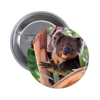 Victorian Koala 6 Cm Round Badge