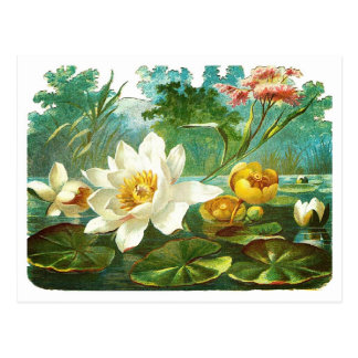 Victorian Pond Flowers Postcard
