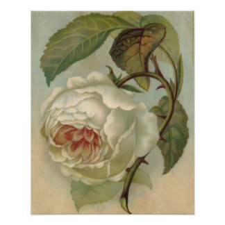 Victorian Rose Postcard Illustration Poster