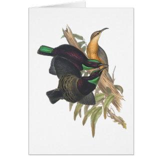 Victoria's Rifle Bird Card