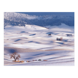 View from Steptoe Butte of rolling hills covered Postcard