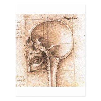 View of a Skull by Leonardo Da Vinci c. 1489 Postcard