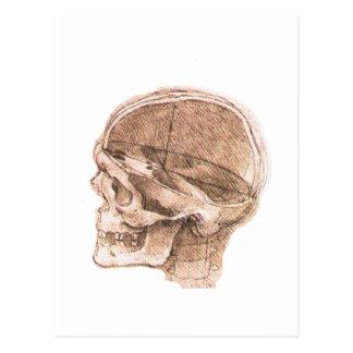 View of a Skull Leonardo da Vinci Postcard
