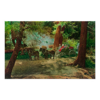 View of a Stage Coach Amongst Big Trees Poster