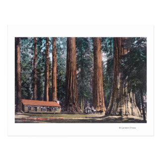 View of Big Trees in Mariposa Grove Post Cards
