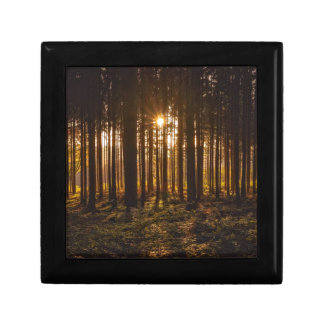 View of Black Trees and Sun Gift Box
