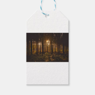 View of Black Trees and Sun Gift Tags