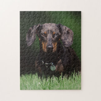 View of Dapple colored Dachshund Jigsaw Puzzle