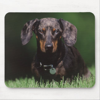 View of Dapple colored Dachshund Mouse Pad