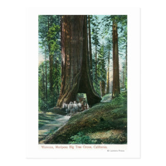 View of Horse Carriage Under Wawona Tree Postcard