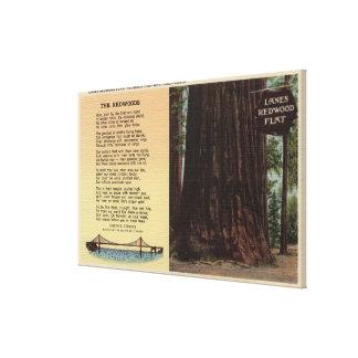 View of Lanes Redwood Flat Canvas Print
