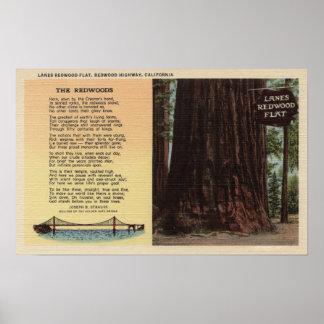 View of Lanes Redwood Flat Poster