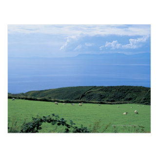 view of sheep grazing on lush hillside postcard