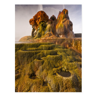 View of the Fly Geyser Postcard