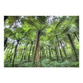View of vegetation in Bali Botanical Gardens, Photograph