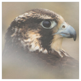 Vignetted Profile of a Peregrine Falcon Fabric