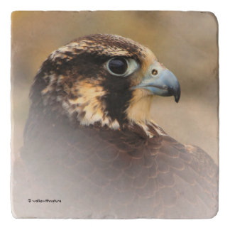 Vignetted Profile of a Peregrine Falcon Trivet