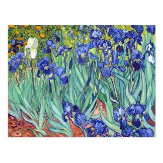 Vincent van Gogh 1889 Irises Postcard