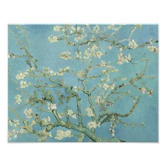 Vincent van Gogh - Almond Blossom Photo Art