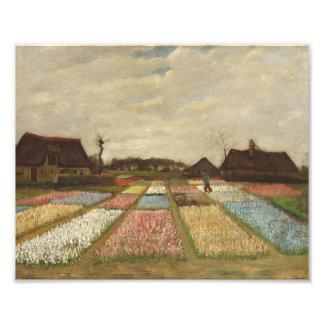 Vincent Van Gogh Bulb Fields Floral Vintage Art Photograph