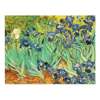 Vincent Van Gogh - Irises Postcard