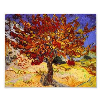 Vincent Van Gogh Mulberry Tree Fine Art Painting Art Photo