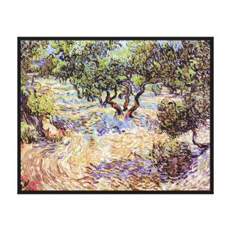 Vincent Van Gogh - Olive Orchard Fine Art Canvas Print