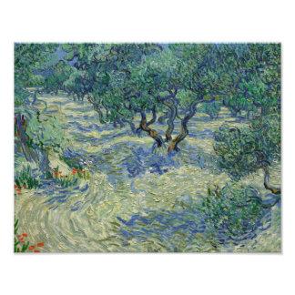 Vincent van Gogh - Olive Orchard Photograph
