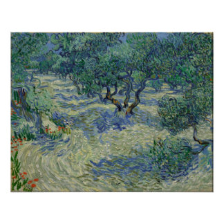 Vincent van Gogh - Olive Orchard Poster