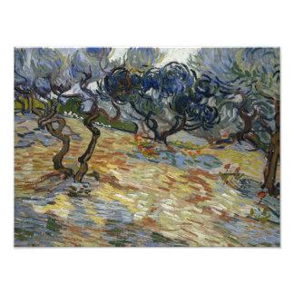Vincent van Gogh - Olive Trees Photograph