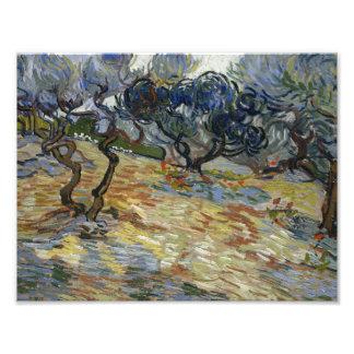 Vincent van Gogh - Olive Trees Photographic Print