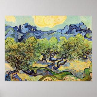 Vincent van Gogh Olive Trees, Post Impressionism Poster