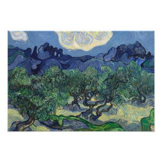 Vincent van Gogh - The Olive Trees Photo Print