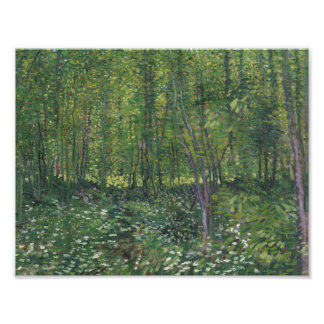 Vincent van Gogh - Trees and Undergrowth Photo