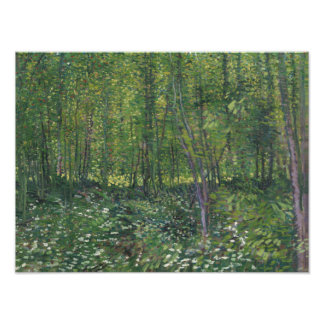 Vincent van Gogh - Trees and Undergrowth Photo Art