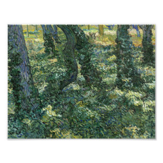 Vincent van Gogh - Undergrowth Photograph