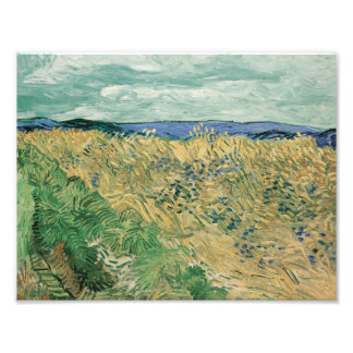 Vincent van Gogh - Wheatfield With Cornflowers Art Photo