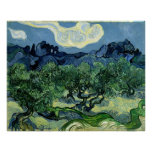 Vincent van Gogh's Olive Trees (1889) Posters