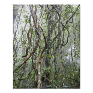 vine and branches twisted in rainforest print