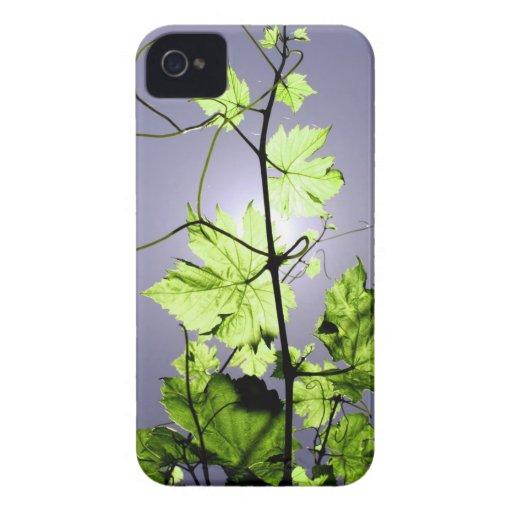 Vine Branch Blackberry Bold Covers