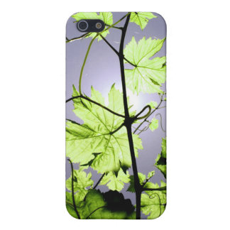 Vine Branch Case For iPhone 5
