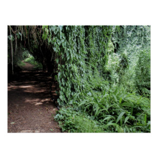Vine-covered hiking trail poster