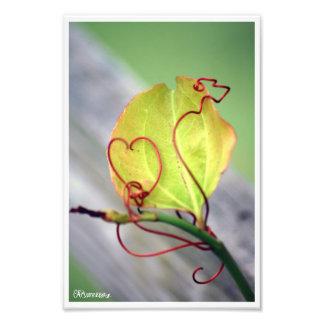 Vine Heart Photographic Print