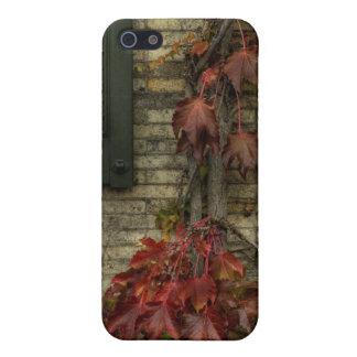 vine iPhone 5 case