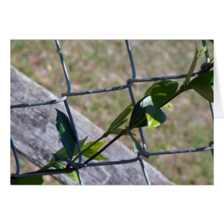 vine on a chain link fence - life finds a way card