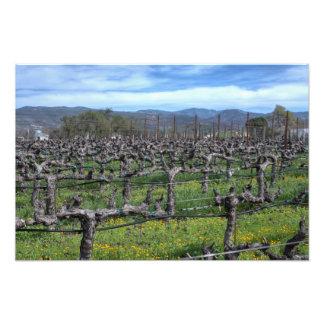 Vines In Winter Napa California Photo