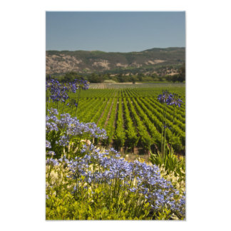 Vineyard and Purple Flowers Photo Print