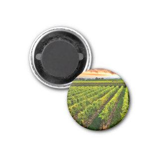 Vineyard at sunset magnet