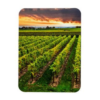 Vineyard at sunset rectangle magnets