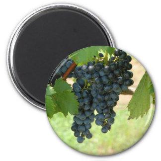 vineyard grapes 6 cm round magnet